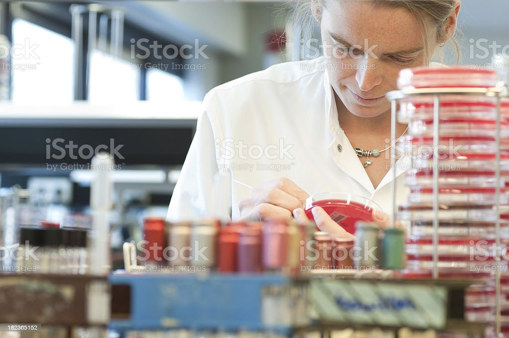 The Medical Microbiology Laboratory royalty-free stock photo