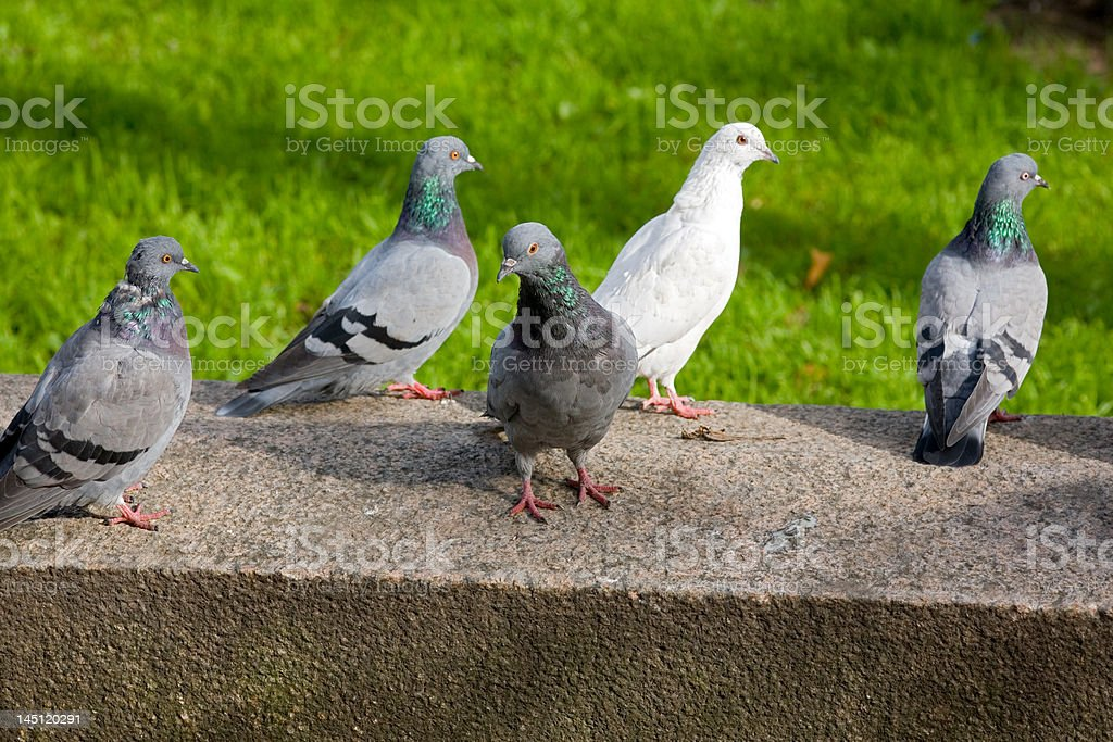 The meeting royalty-free stock photo