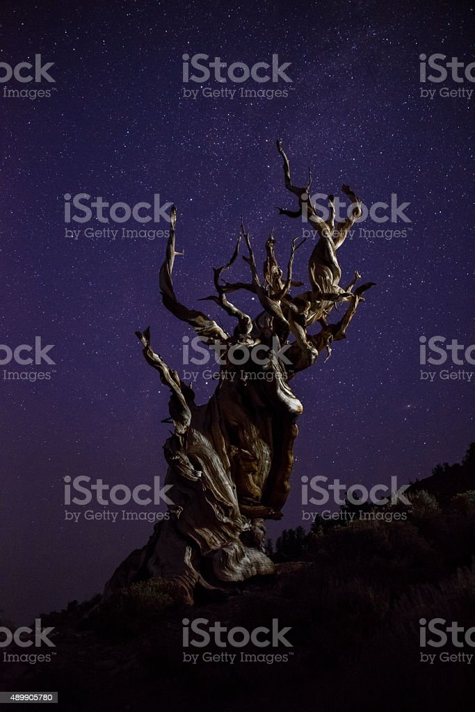 The Methusela under the starry sky. stock photo