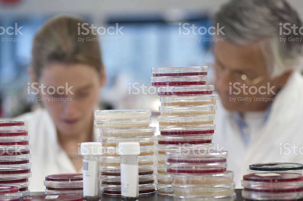 The Microbiology Laboratory stock photo