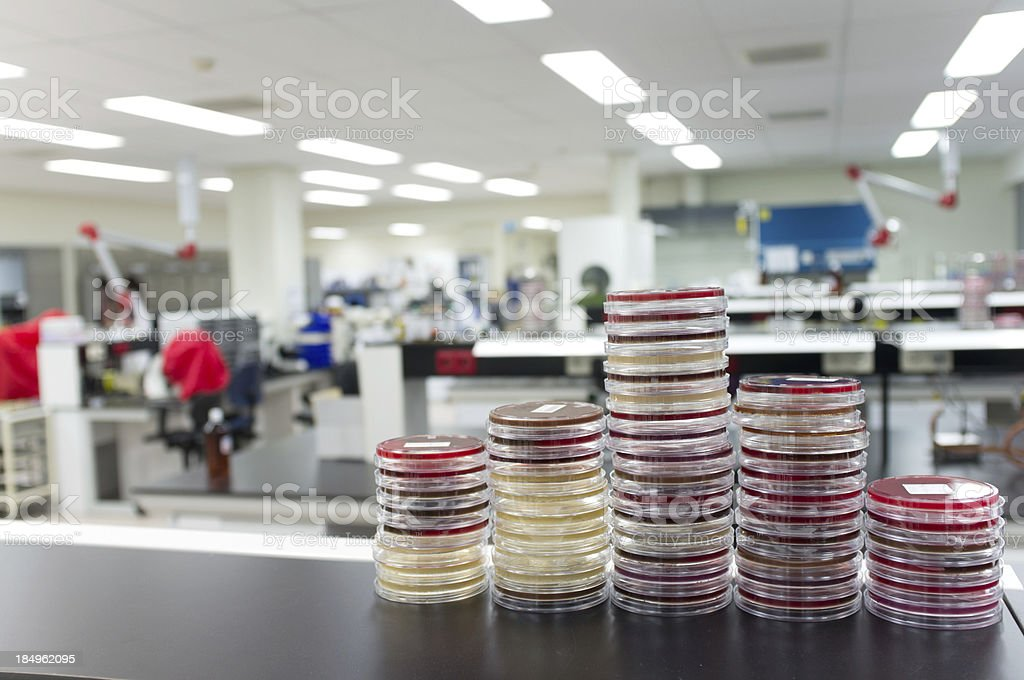The Microbiology Laboratory royalty-free stock photo