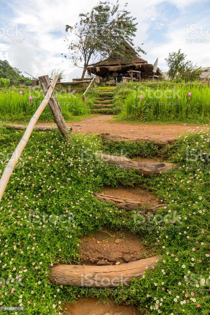 The Mon Chaem mountain flower garden in Chiang Mai, Thailand stock photo