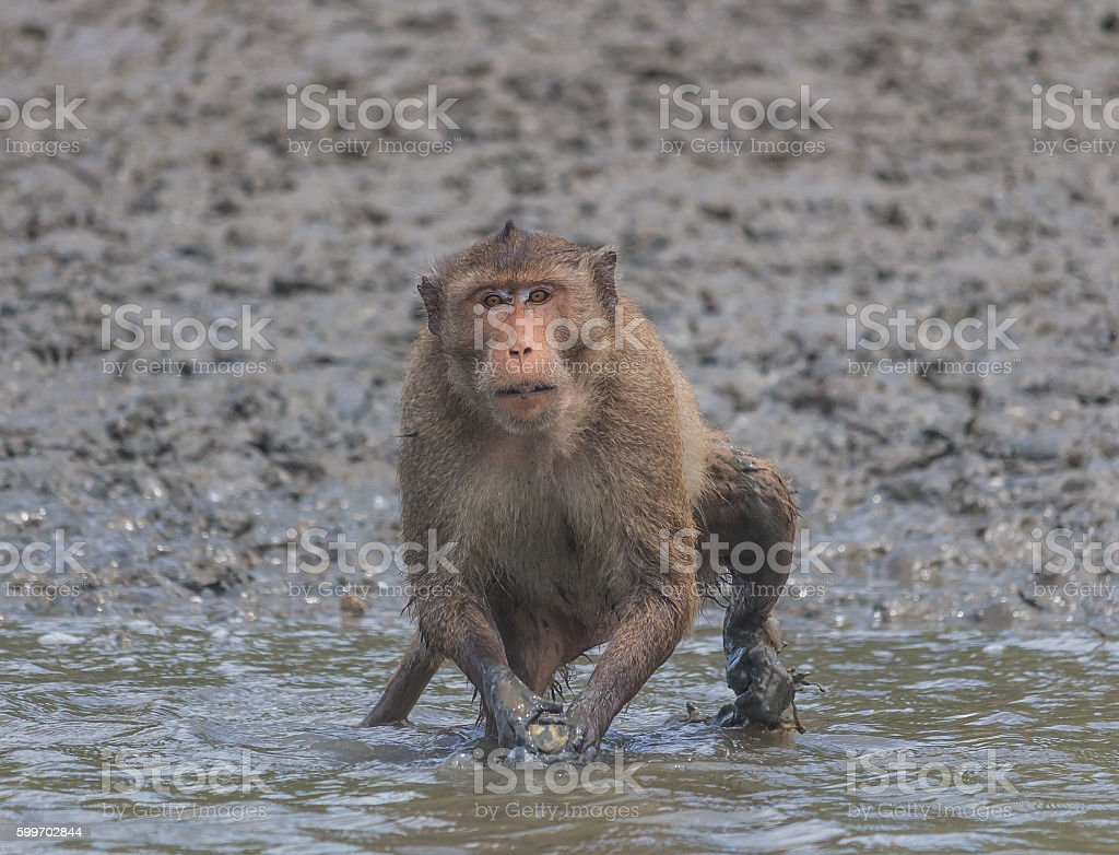 The monkey at the riverside stock photo