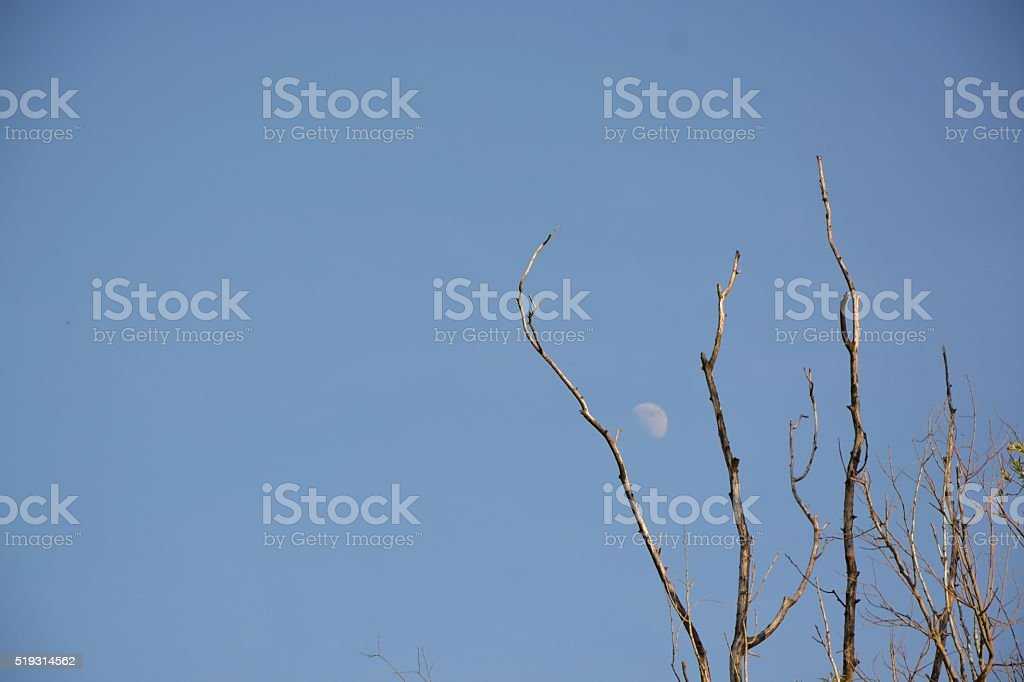 The Moon In The Day Time stock photo
