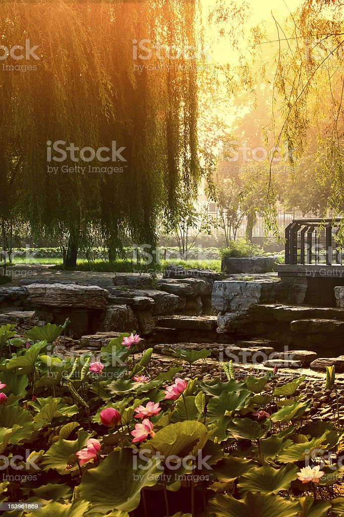 The morning in a park royalty-free stock photo