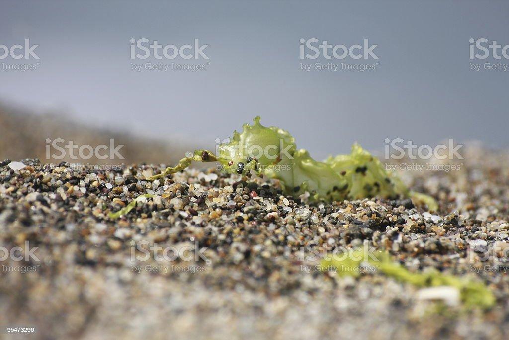 The Moss eye stock photo