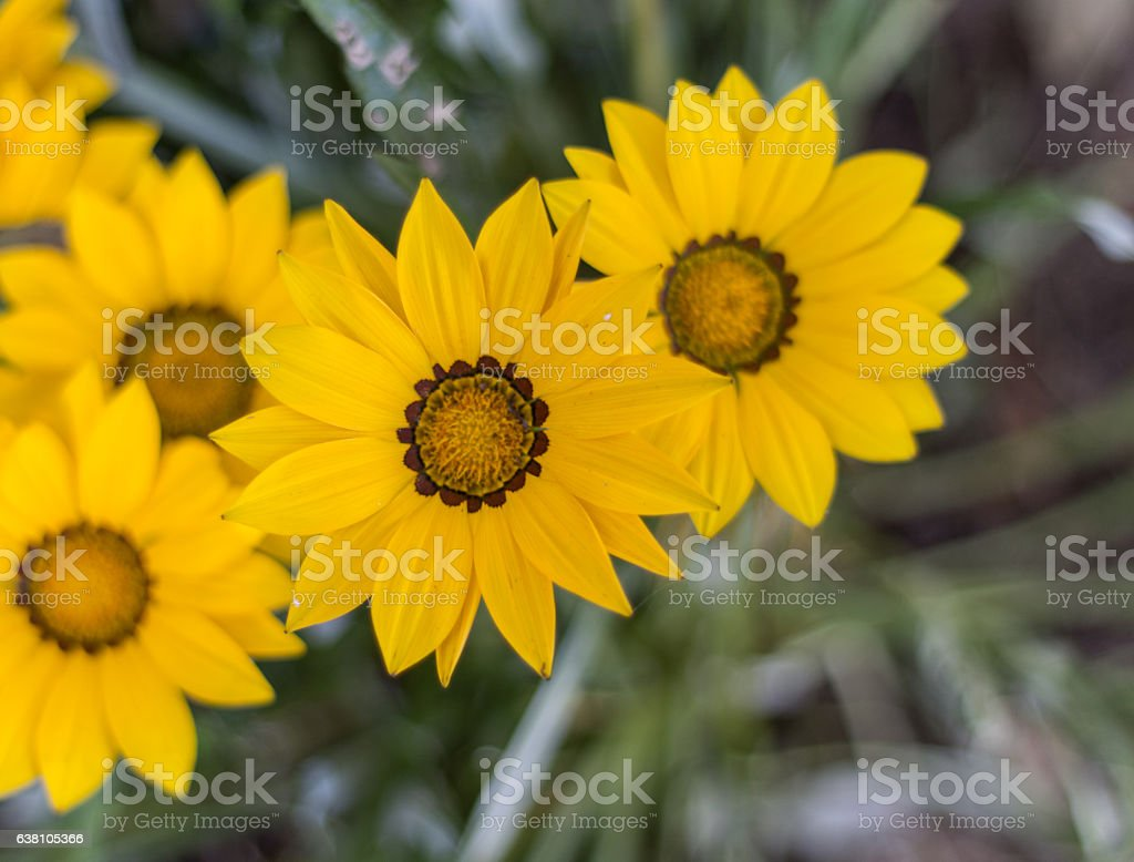 The most beautiful of the garden stock photo