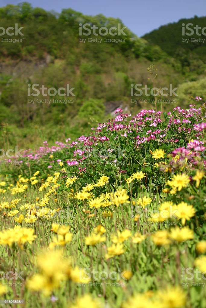 The mountain in the spring stock photo