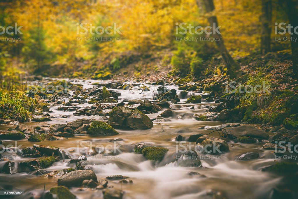 The mountain river in the autumn forest, tilt shift stock photo