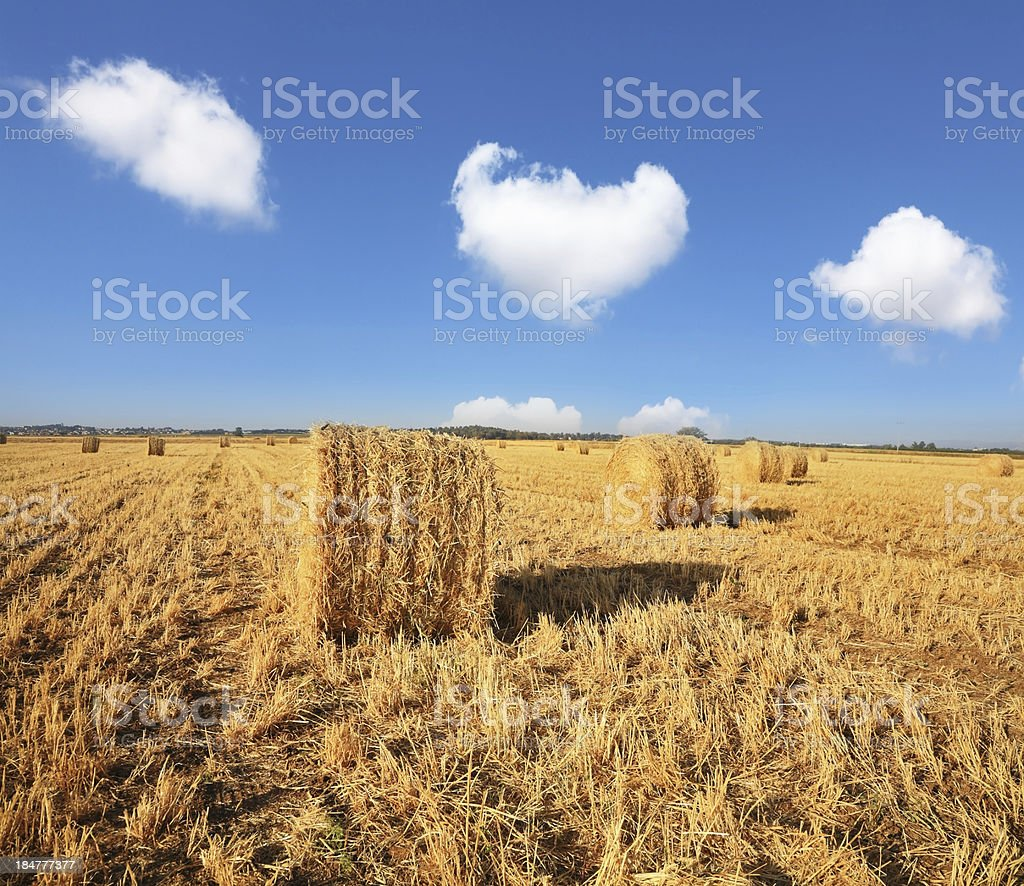 The mowed grass is put in stacks royalty-free stock photo