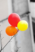 the multi-colored balls hanging on a bough