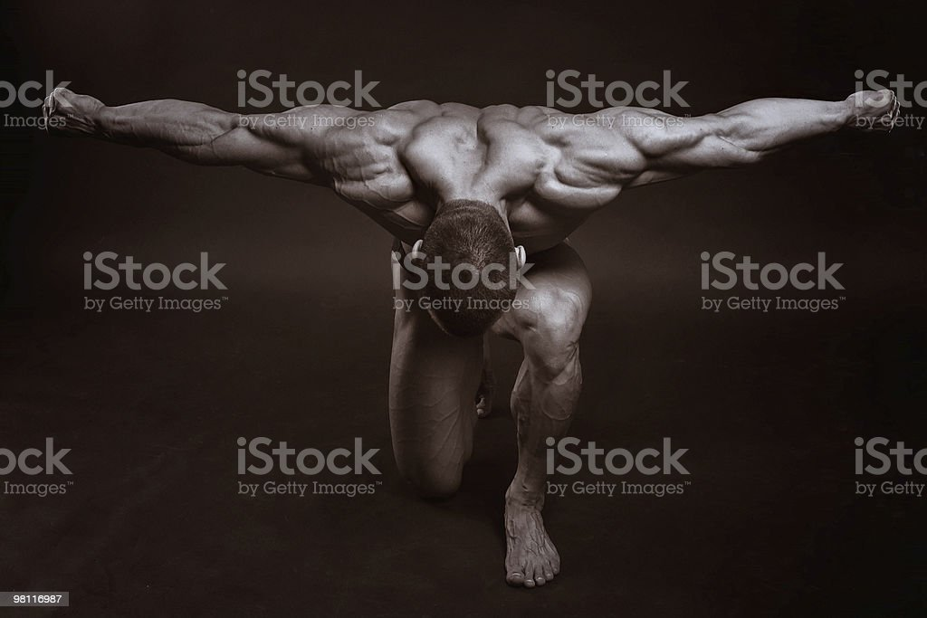 The muscular male royalty-free stock photo
