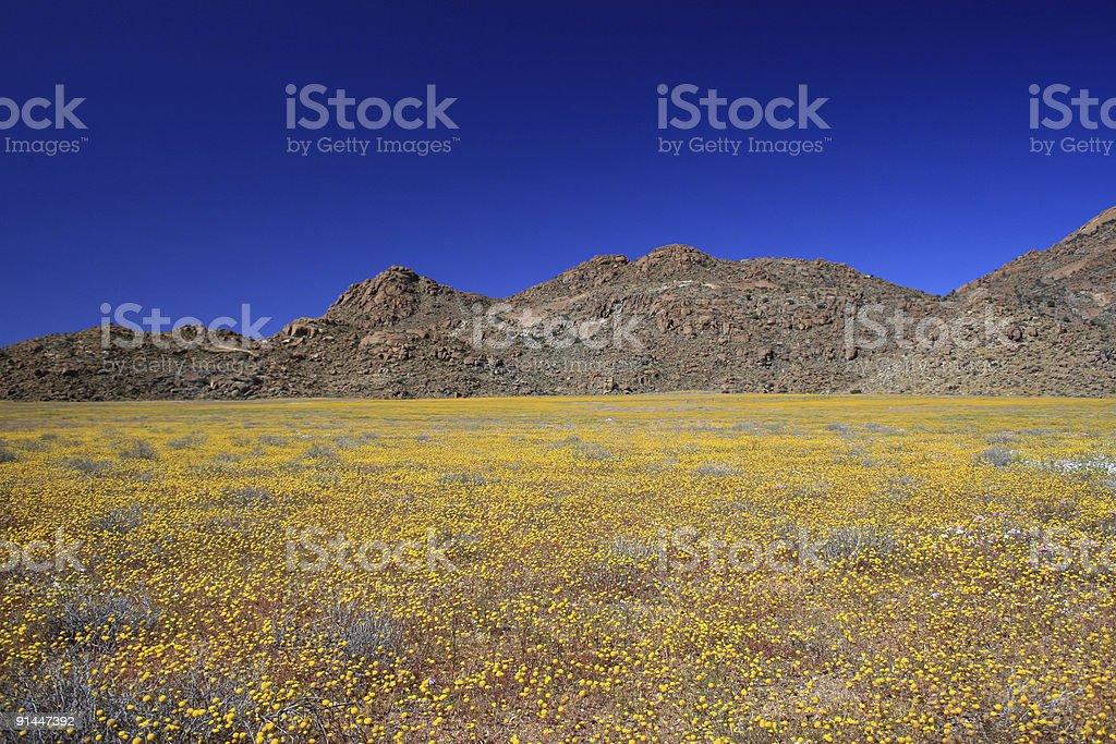 The Namaqualand royalty-free stock photo