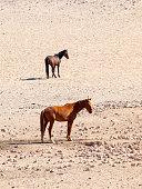 The Namib Desert feral horses herd at waterhole near Aus