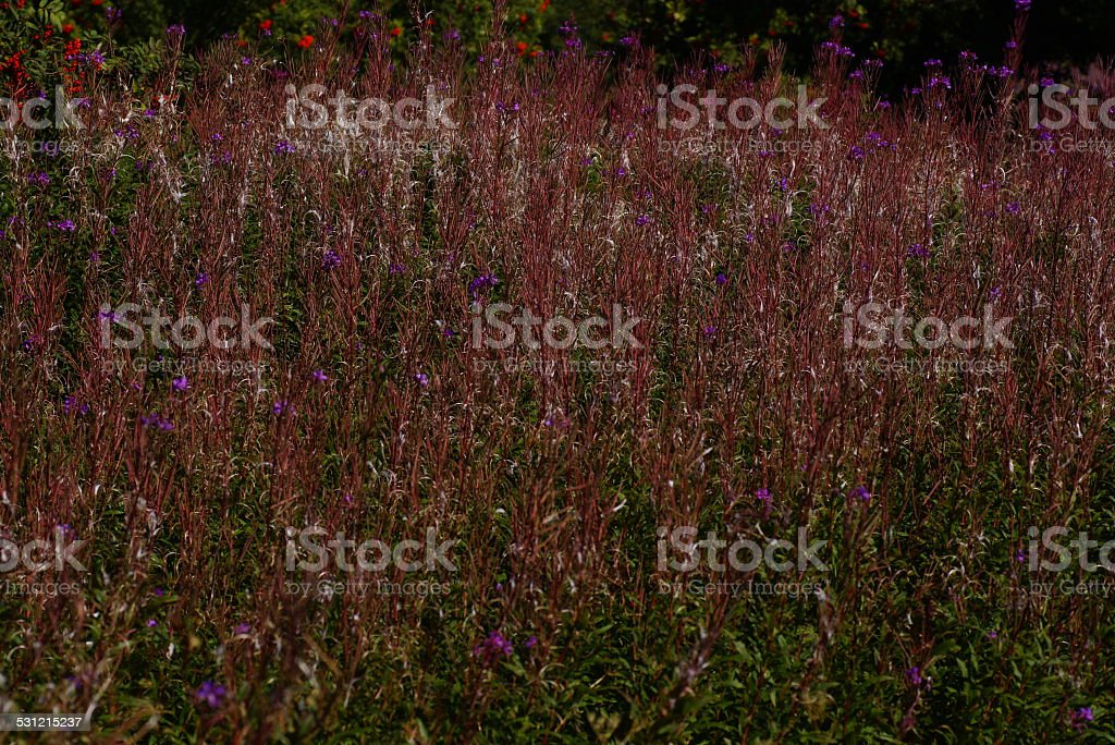 THe natural background stock photo