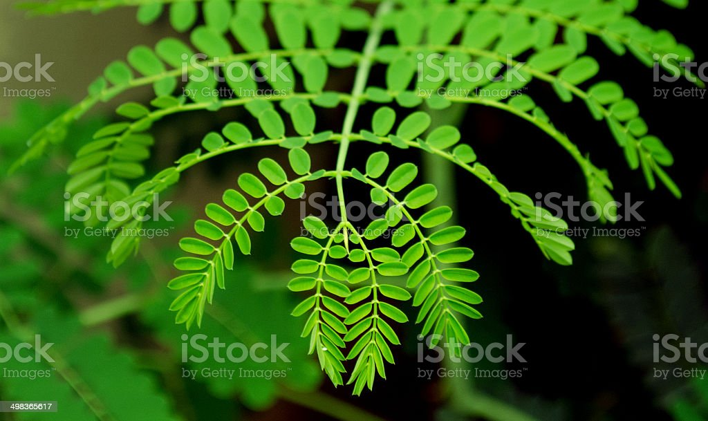 the natural pattern royalty-free stock photo
