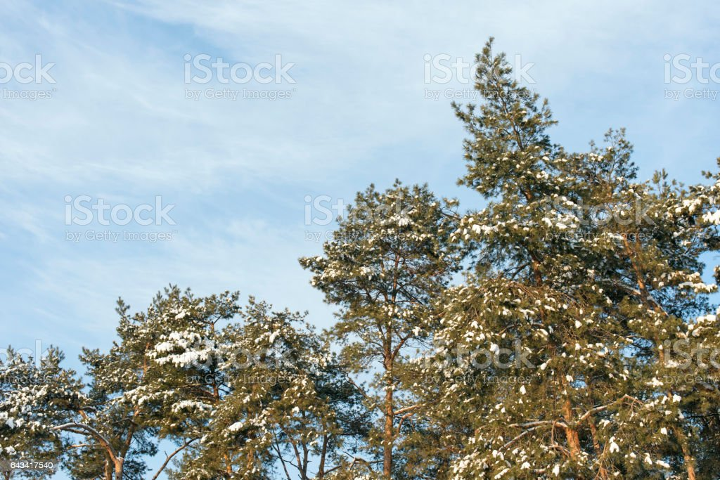 the nature and the seasons stock photo