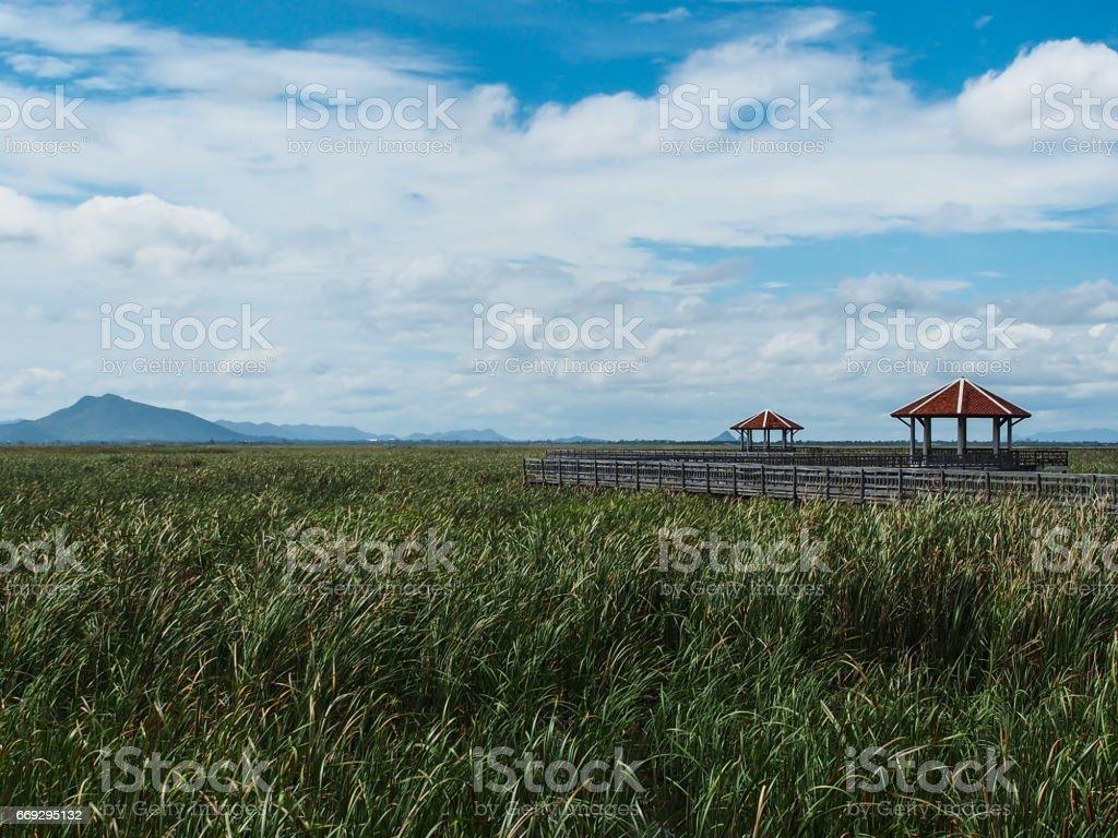 The nature is all around, Khao Sam Roi Yot, Prachuap Khiri Khan, Thailand. stock photo