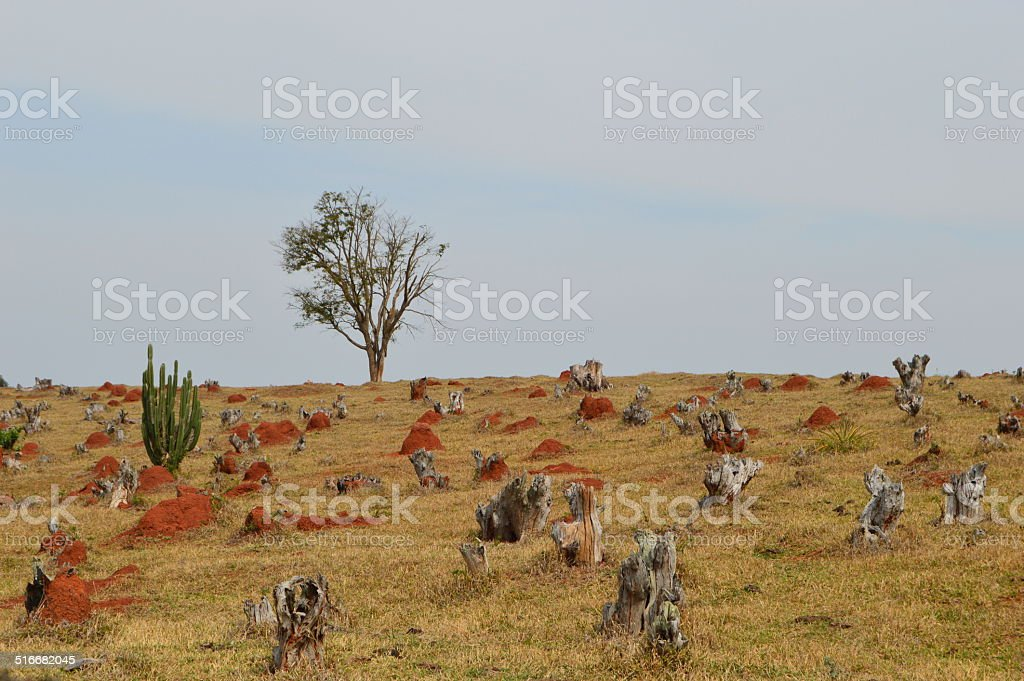 The nature is claiming for help stock photo