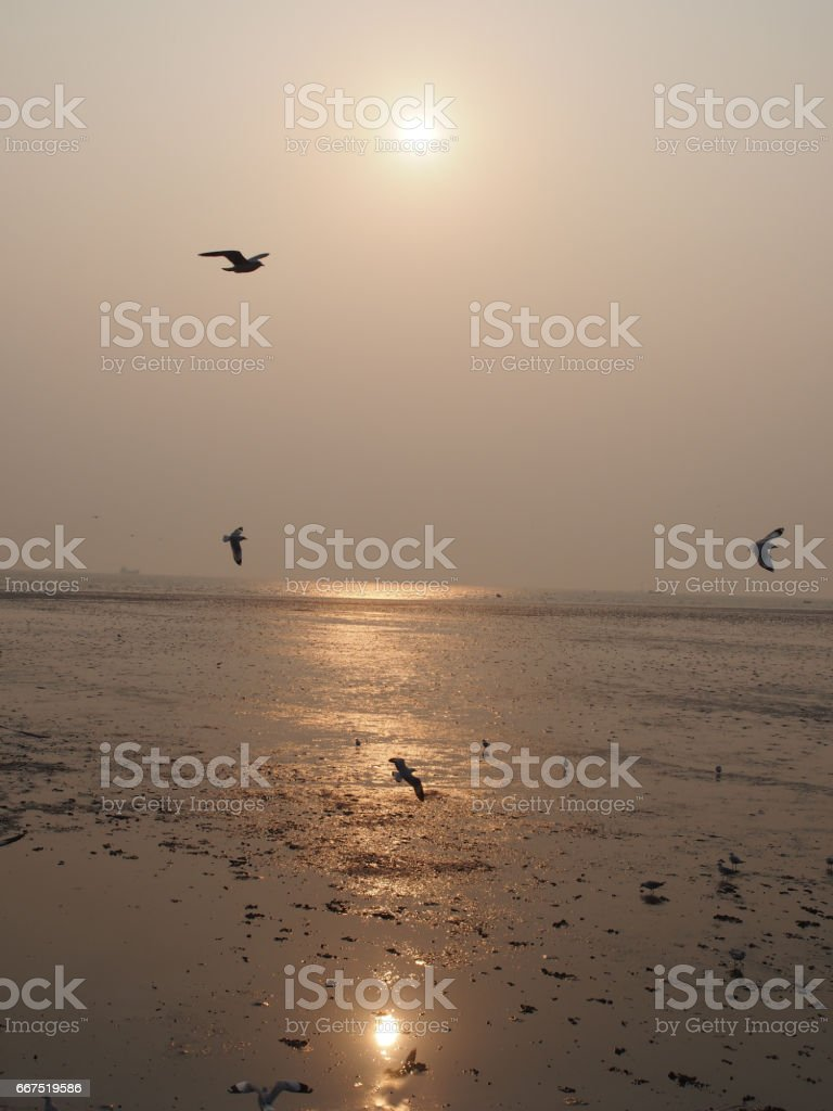 The nature moment of the sea and birds stock photo