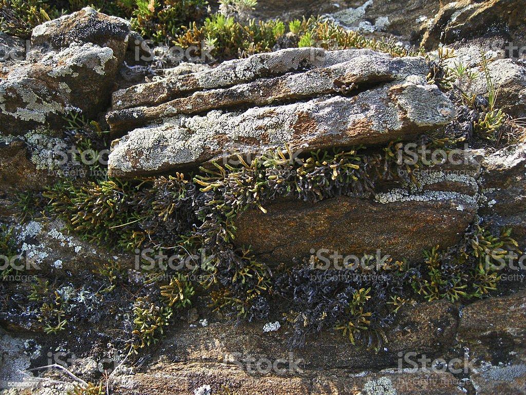 The Nature Of Baikal. Slates, overgrown with vegetation royalty-free stock photo