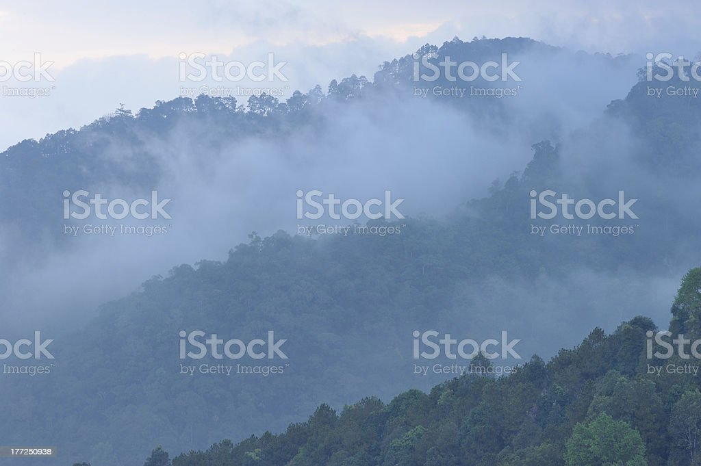 The nature of light and morning mist royalty-free stock photo
