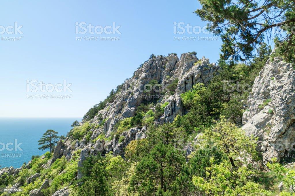 The nature of the Crimean peninsula, relic vegetation on the rocks stock photo