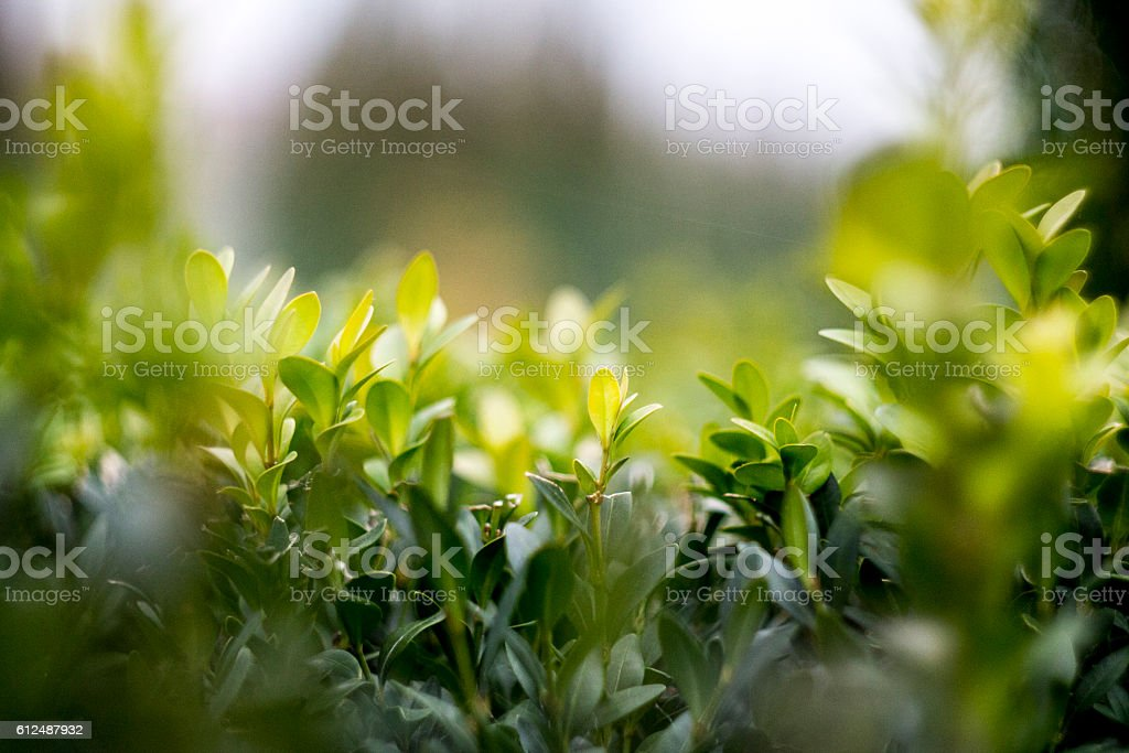 The nature of the microcosm stock photo
