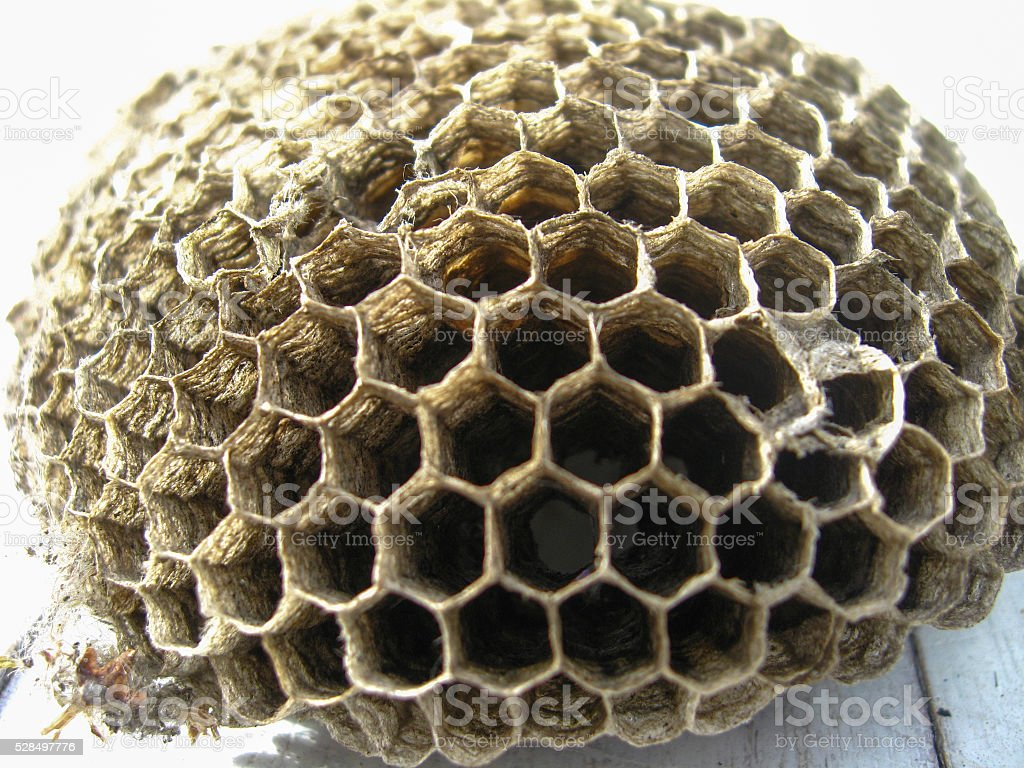 the nest of wasps stock photo