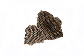 The nest of wasps with honey in the honeycomb cells