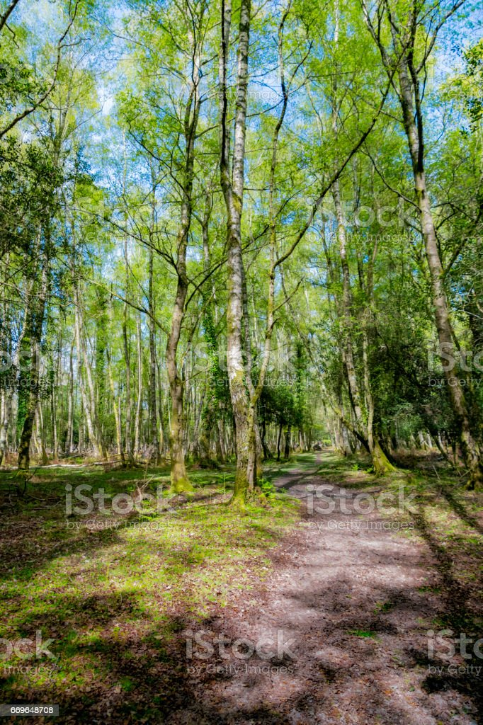 The New Forest National Park in Hampshire stock photo