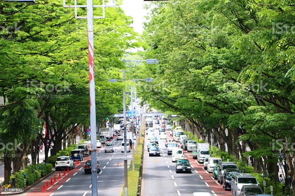 The new green leaves of Omotesando stock photo