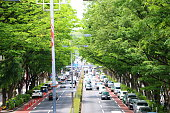 The new green leaves of Omotesando