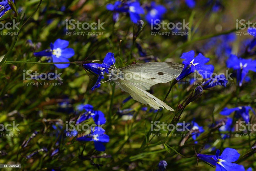 The nice taste of flower stock photo