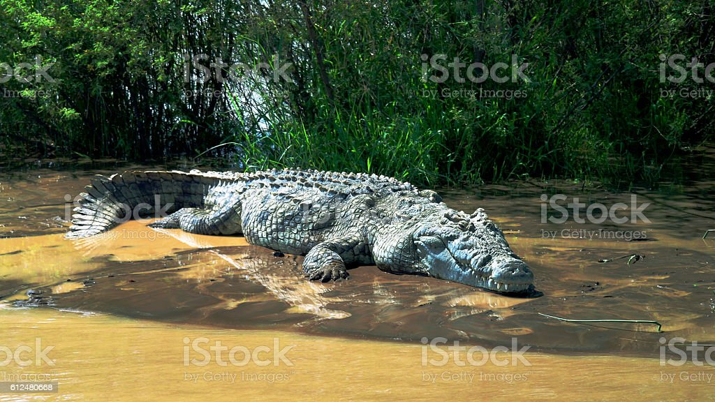 The Nile crocodile in Chamo lake, Ethiopia stock photo