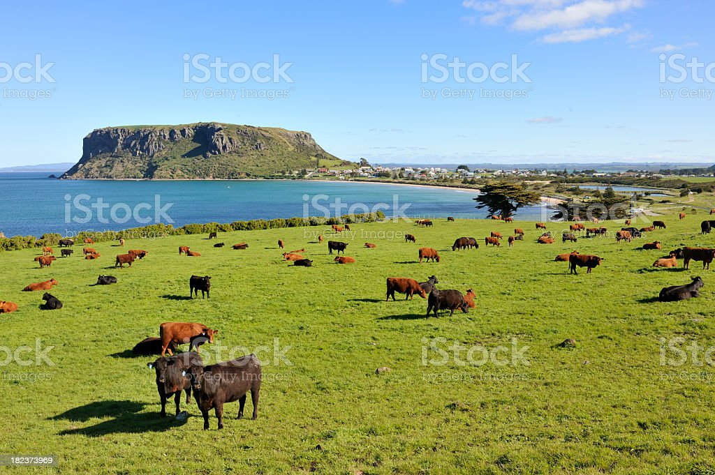 The Nut with cows feeding on grass in foreground stock photo