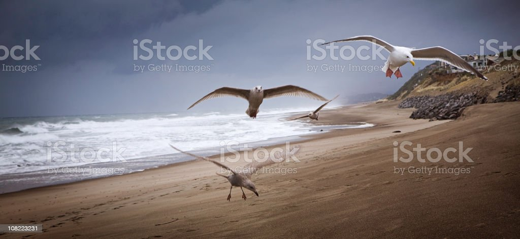 The Ocean Beach with Flying Birds and Stormy Sky royalty-free stock photo