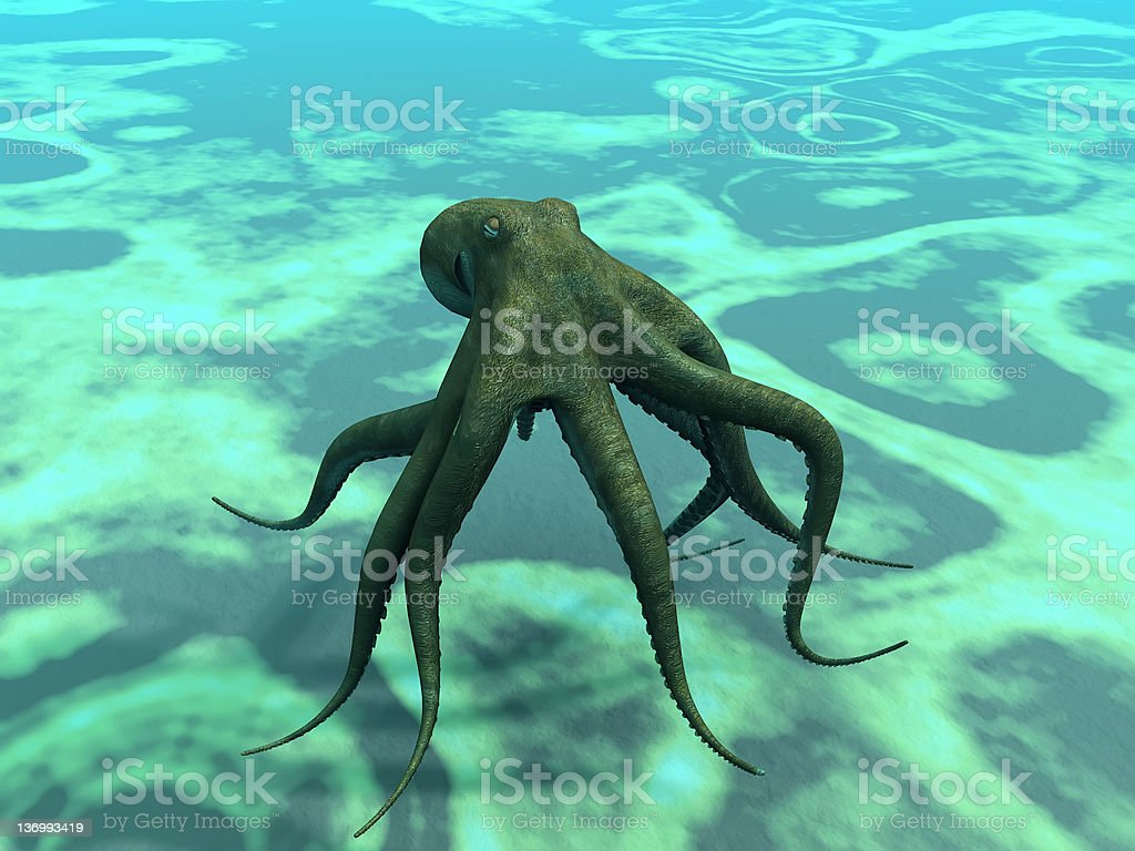 the octopus royalty-free stock photo