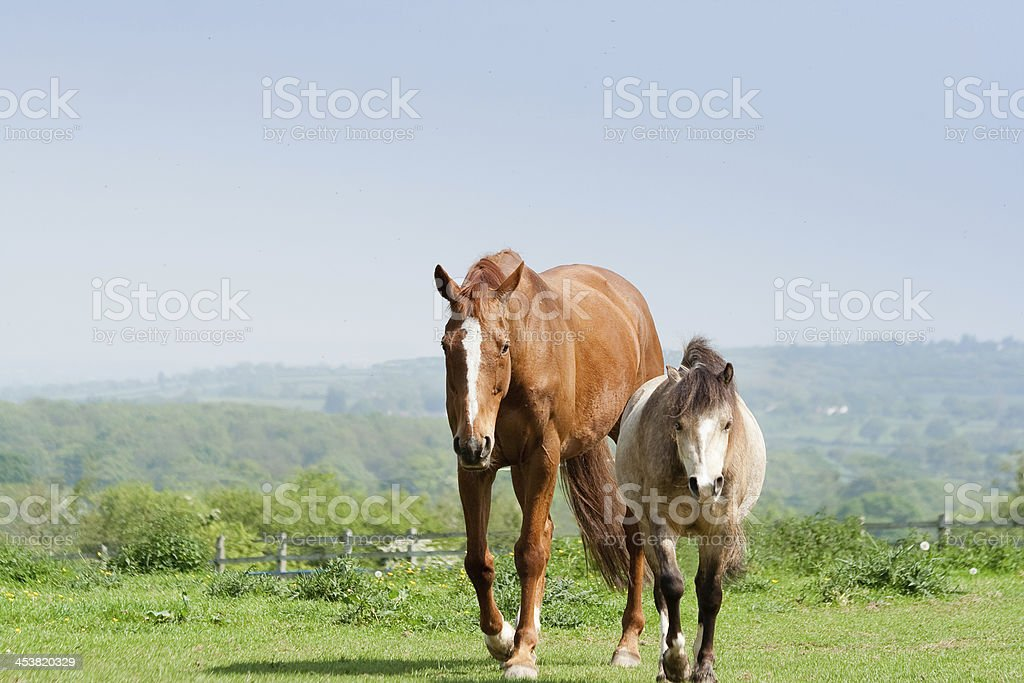 The odd couple royalty-free stock photo