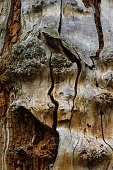 The old and mouldering  bark of  tree
