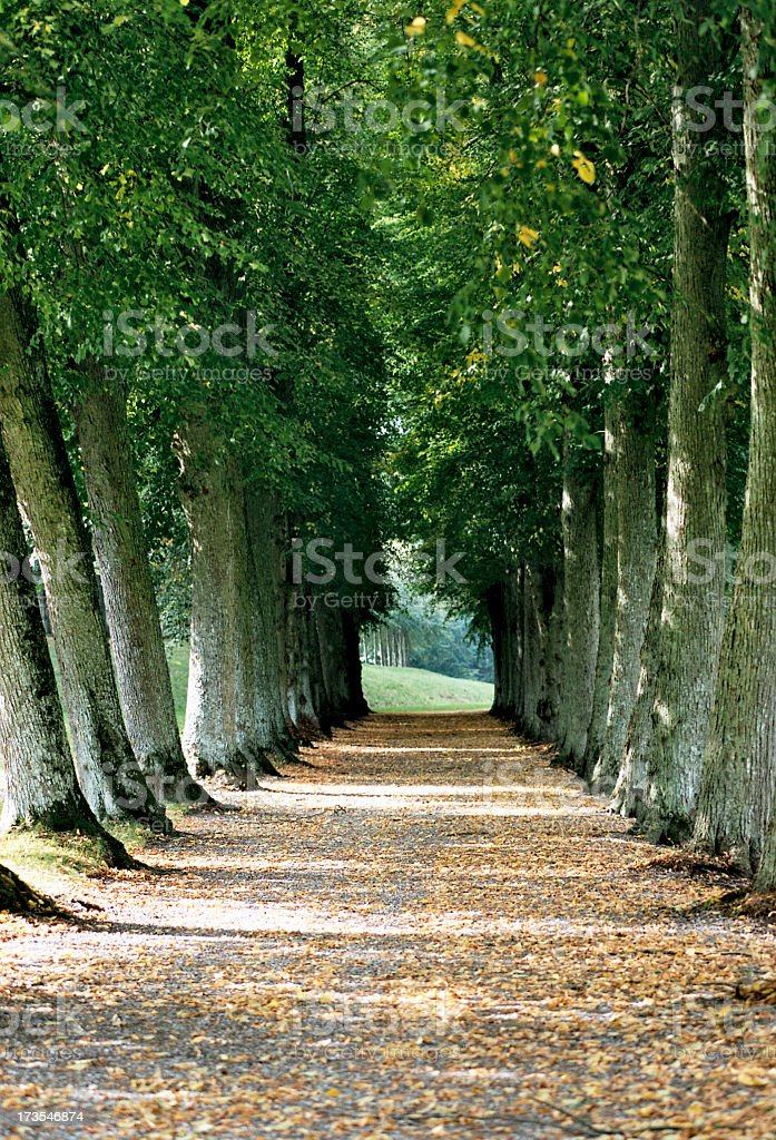 The Old Avenue stock photo