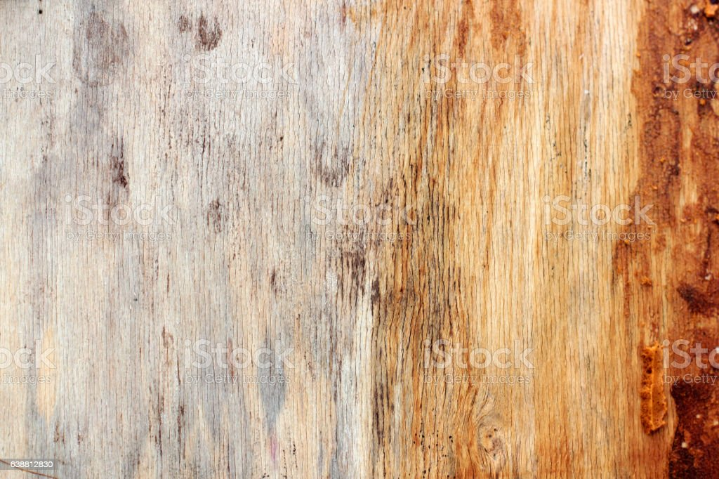 the old plywood with remnants of paint stock photo