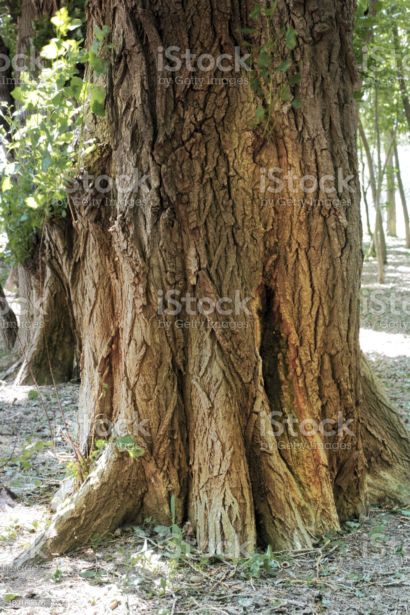 The old stump, covered with a moss in forest. Morning royalty-free stock photo