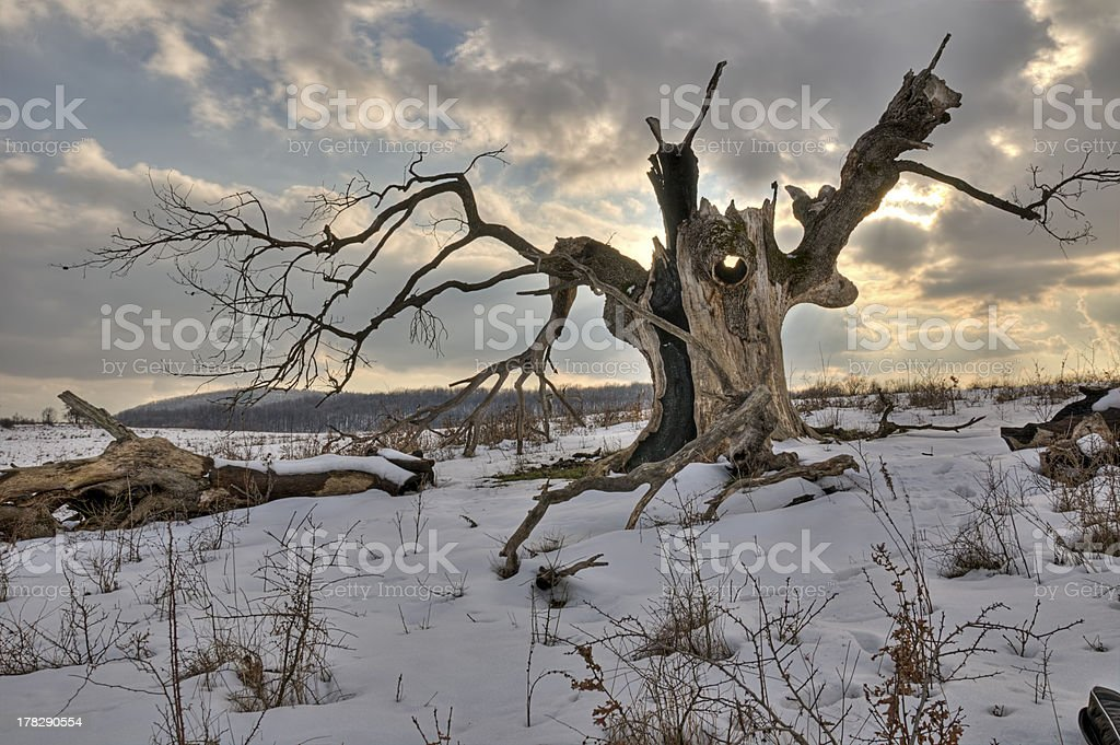The old tree stock photo