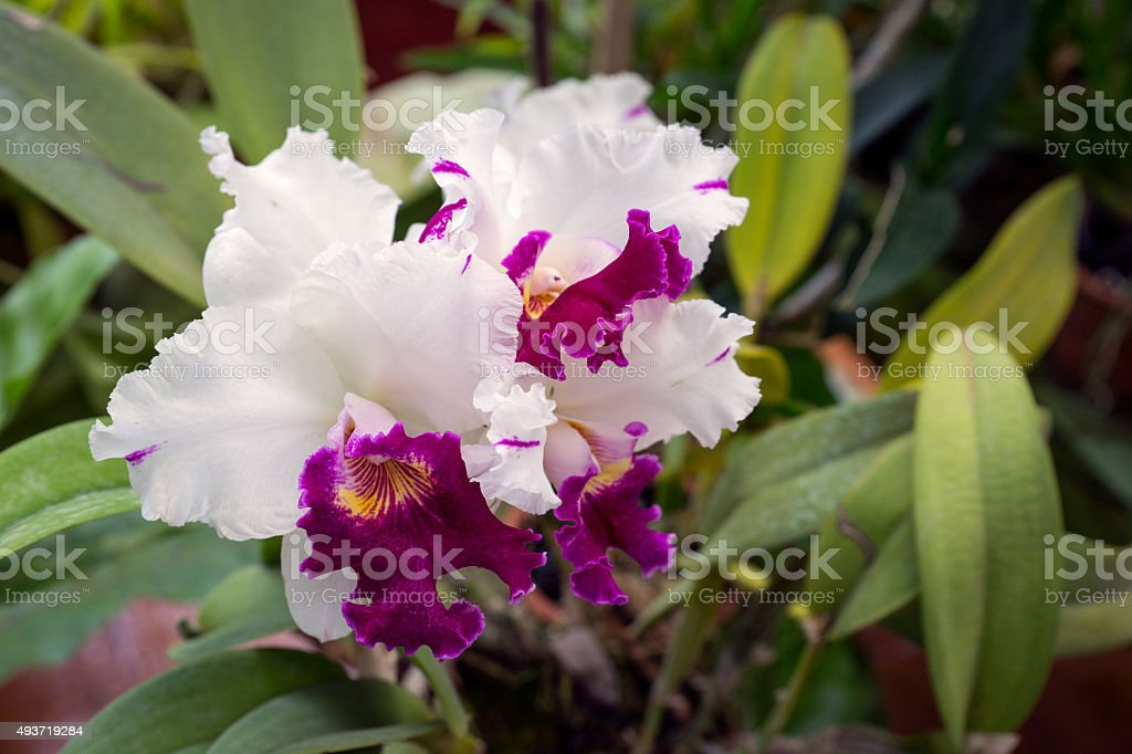 The Orchid House. The Orchid Flower. stock photo