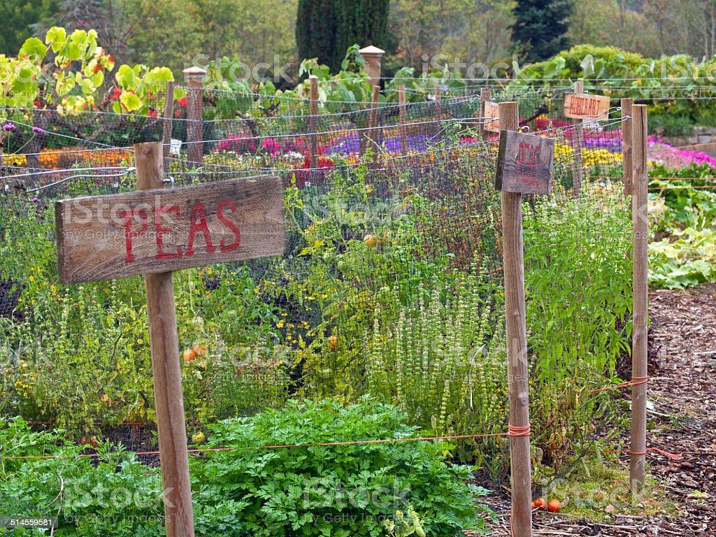The Oregon Garden Fall Vegetable Garden Plant Row Signs stock – Garden Plant Signs
