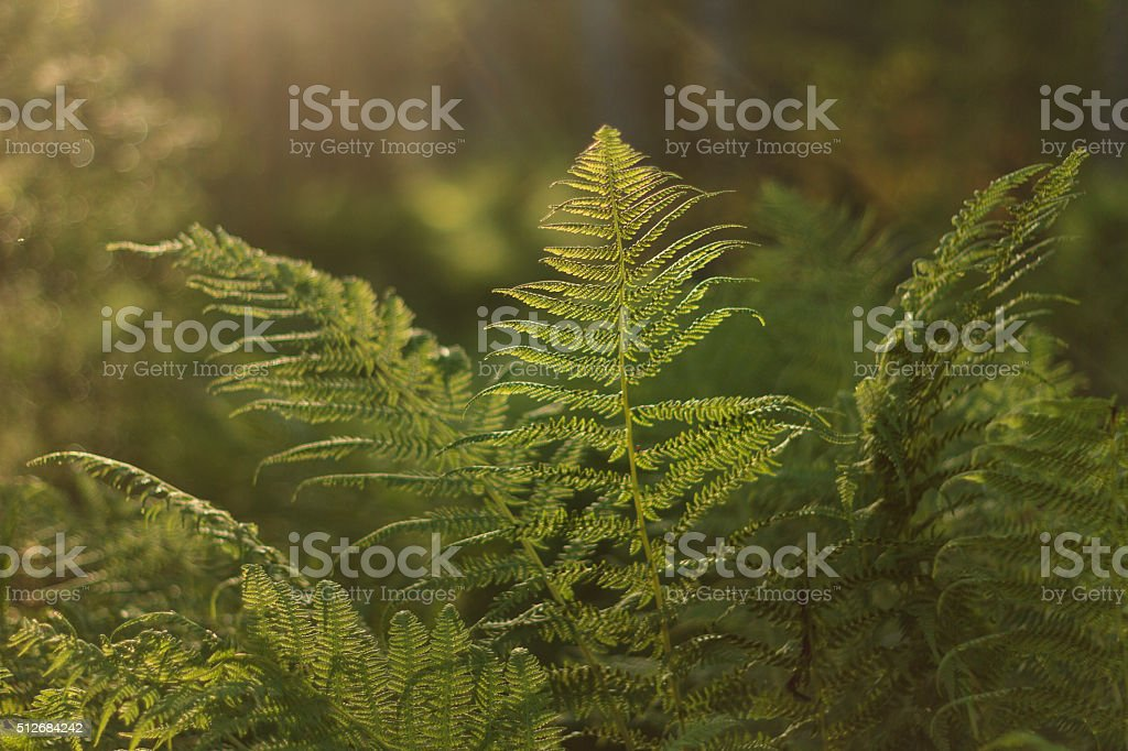 The original world of ferns stock photo