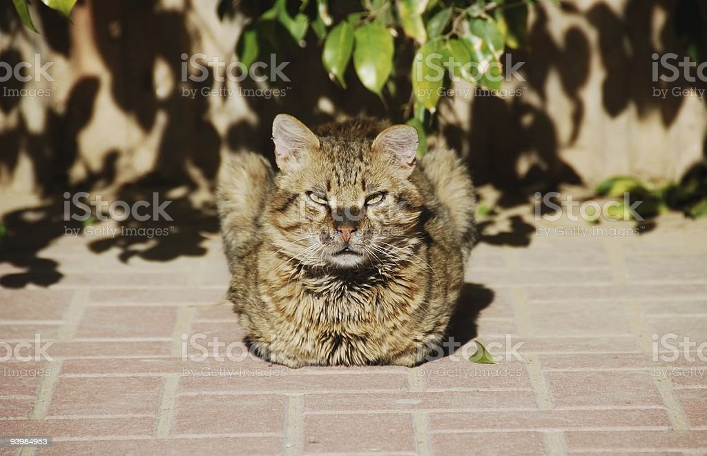 The owner of a court yard stock photo