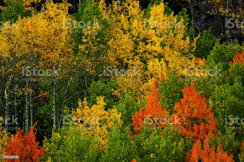 The Painted Forest Of Colorado stock photo