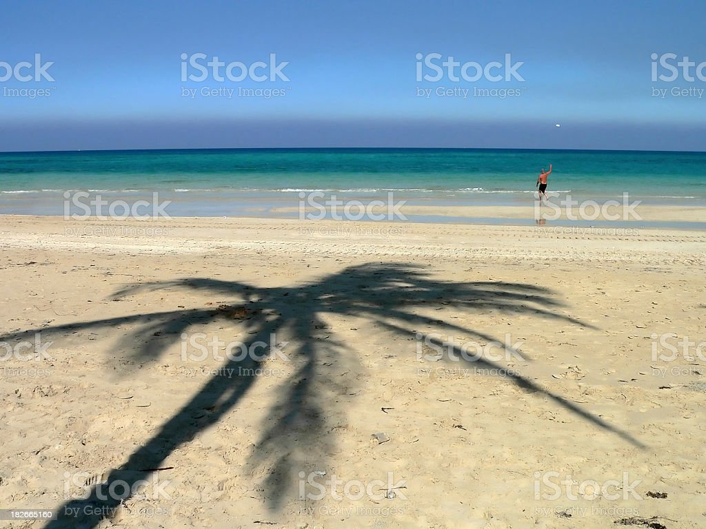The palm tree royalty-free stock photo